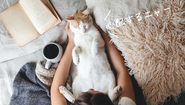ベットと猫ペット